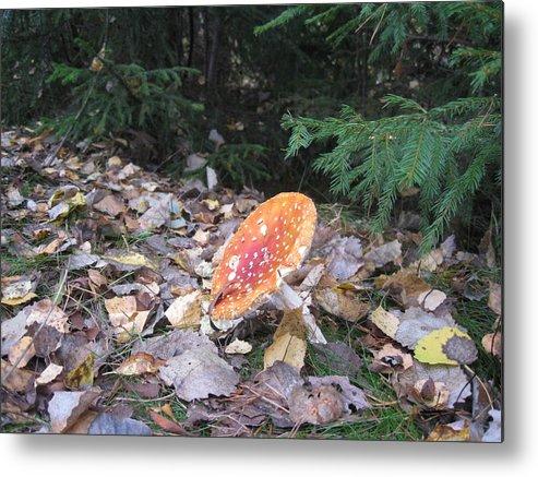 Mushroom Fly Agaric Forest  Metal Print featuring the photograph Mushroom A Fly Agaric by Yury Bashkin