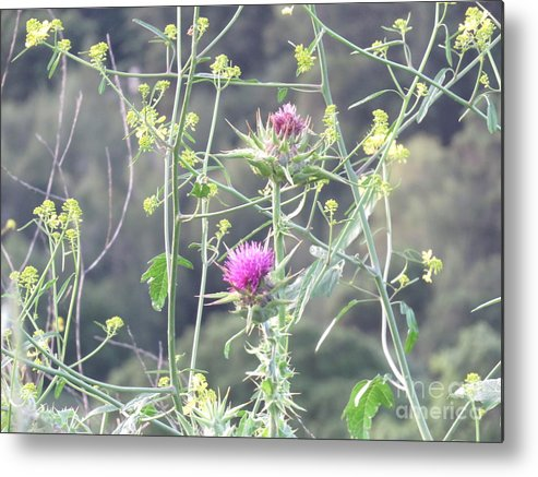 Floral Metal Print featuring the photograph Mustard And Thistle by Suzanne Leonard