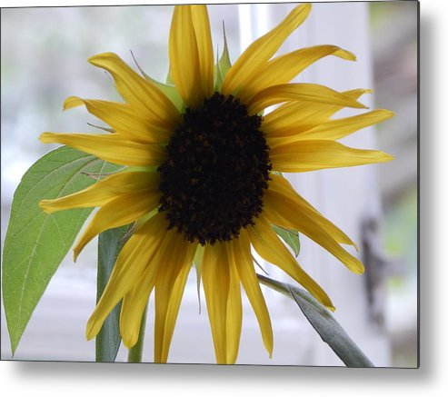 Sunflowers Sunflower Nature Flowers Metal Print featuring the photograph My Beautiful Sunflower by Sharon Denisewicz