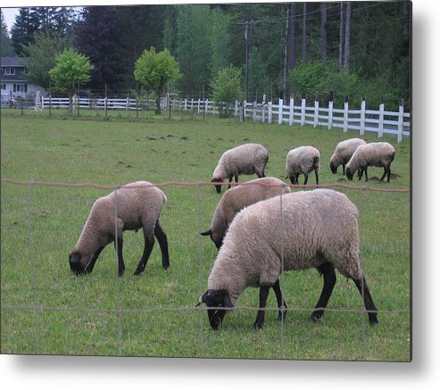 Metal Print featuring the digital art My Sheep Know My Voice by Barb Morton