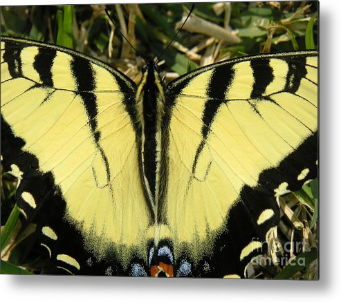 Nature Metal Print featuring the photograph Nature In The Wild - A Natural Painting by Lucyna A M Green