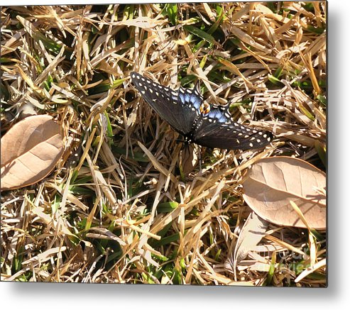Nature Metal Print featuring the photograph Nature In The Wild - Beauty Camouflaged by Lucyna A M Green
