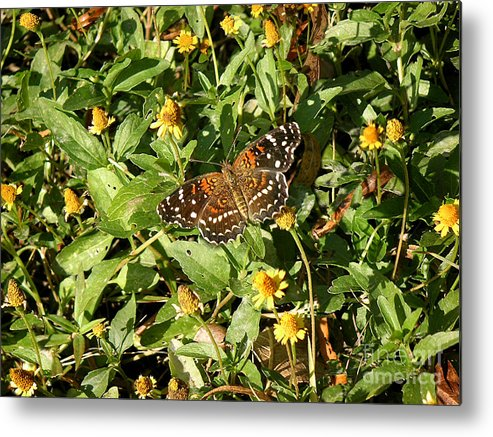 Nature Metal Print featuring the photograph Nature In The Wild - Colors Of Autumn by Lucyna A M Green