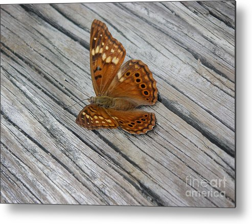 Nature Metal Print featuring the photograph Nature In The Wild - Fall Colors by Lucyna A M Green