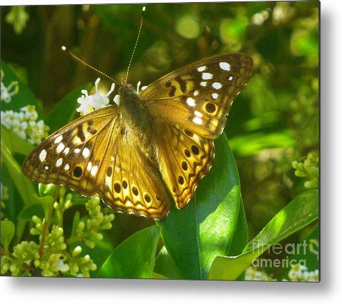 Nature Metal Print featuring the photograph Nature In The Wild - Kaleidoscope Of Color by Lucyna A M Green
