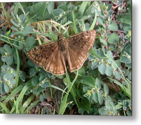 Nature Metal Print featuring the photograph Nature In The Wild - Subtle Beauty by Lucyna A M Green