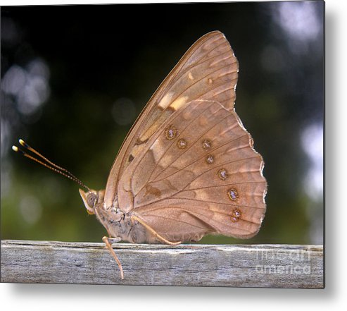 Nature Metal Print featuring the photograph Nature In The Wild - The Autumn Migrant by Lucyna A M Green