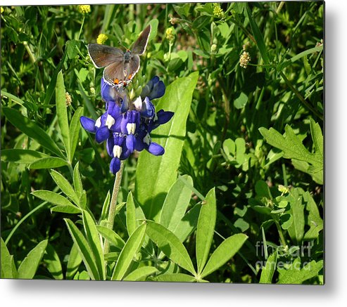 Nature Metal Print featuring the photograph Nature In The Wild - Those Sweet Blues by Lucyna A M Green