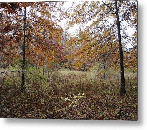 Autumn Landscape Metal Print featuring the photograph Nature's Expression-10 by Leonard Holland