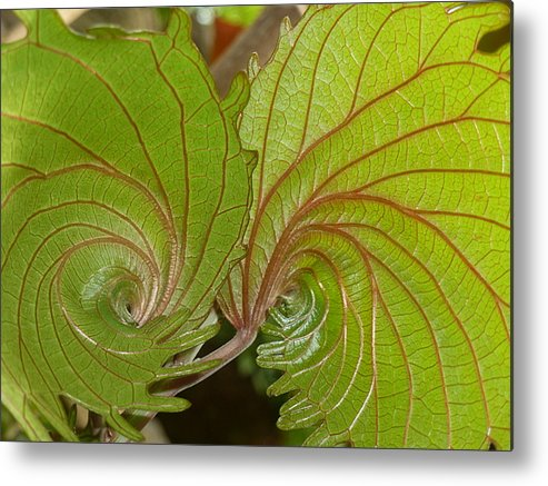 Nature's Fractals Metal Print featuring the photograph Nature's Fractals by Beth Akerman