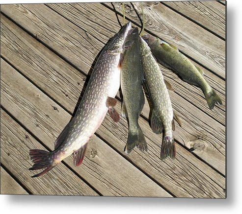 Fish On Stringer Metal Print featuring the photograph Nice Catch by Dean Frick