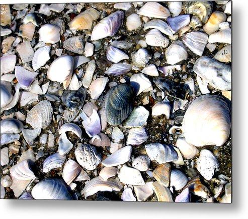Ocracoke Metal Print featuring the photograph Ocracoke Shells by Wayne Potrafka