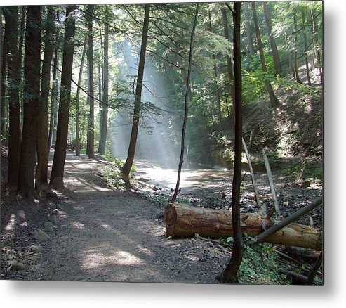 Photo Metal Print featuring the photograph Ohio Woods by Mindy Newman