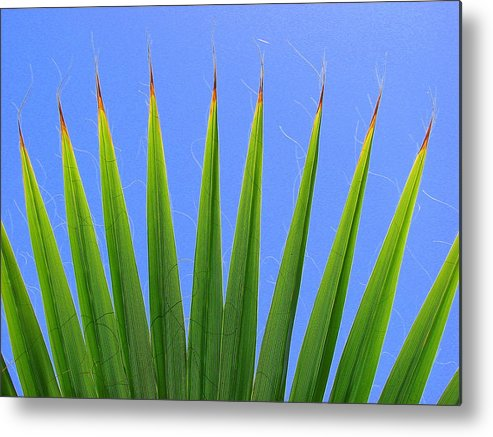 Palm Metal Print featuring the photograph Palm 2 by Kathy Roncarati