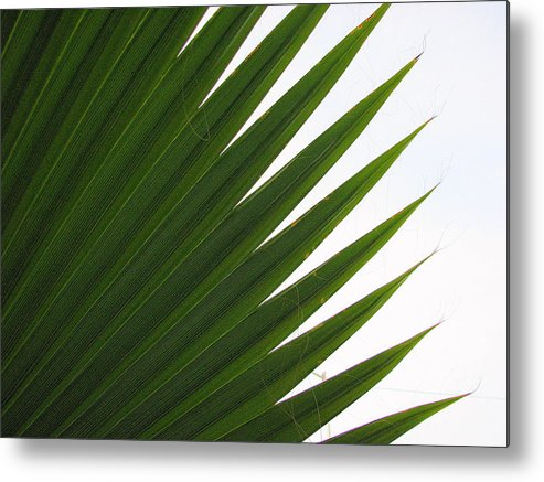 Palm Metal Print featuring the photograph Palm by Kathy Roncarati