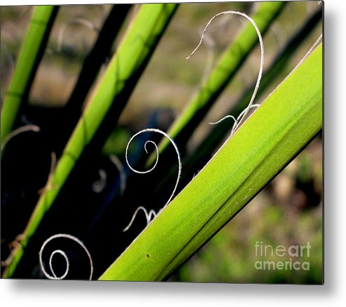 Palm Metal Print featuring the photograph Palm Strings by PJ Cloud