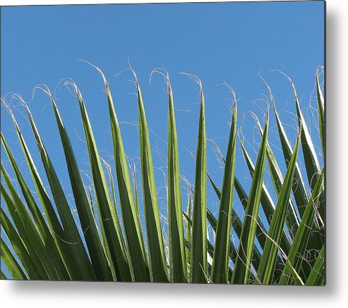 Palms Metal Print featuring the photograph Palms by Kathy Roncarati