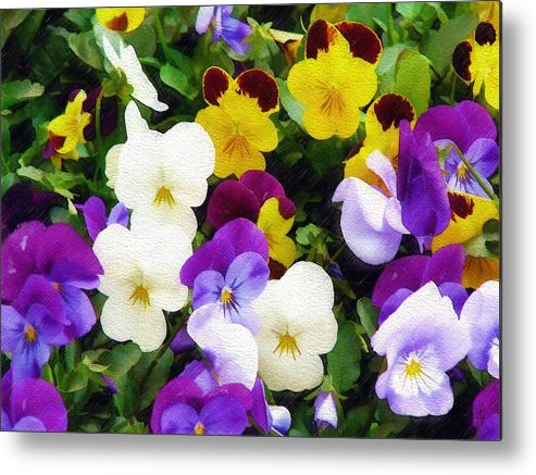 Pansies Metal Print featuring the photograph Pansies by Sandy MacGowan
