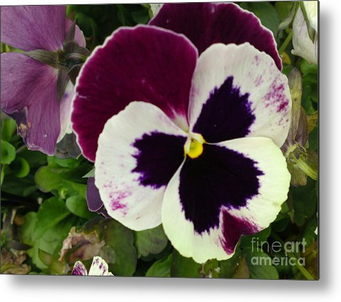 Flower Metal Print featuring the photograph Pansy Face by DebiJeen Pencils