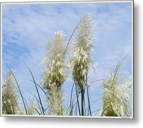 Grass Sun Sky Floral Scenery Metal Print featuring the photograph Papas Grass In The Sun by Linda Ebarb