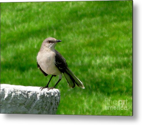 Bird Metal Print featuring the photograph Pause To Reflect by PJ Cloud