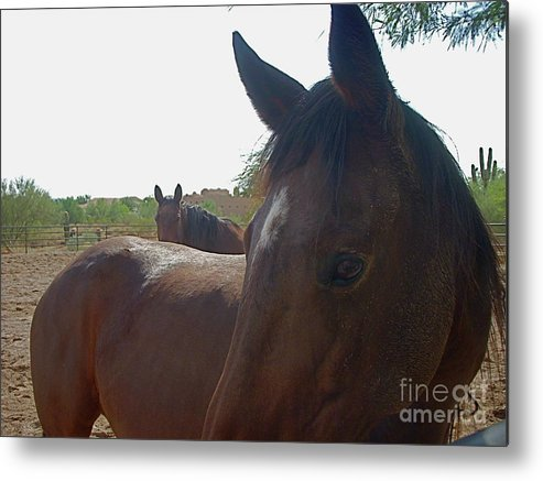 Horse Metal Print featuring the photograph Paying Attention by Amy Strong