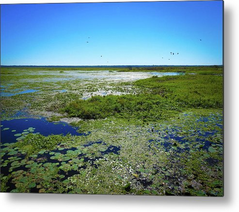 Landscapes Metal Print featuring the photograph Paynes Prairie View by Elie Wolf
