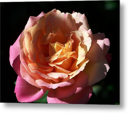 Flowerscape Metal Print featuring the photograph Peace by Maggie Cruser