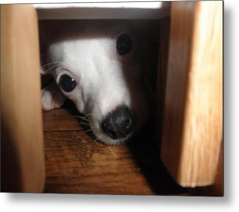 Puppy Metal Print featuring the photograph Peek A Boo by Camille Reichardt