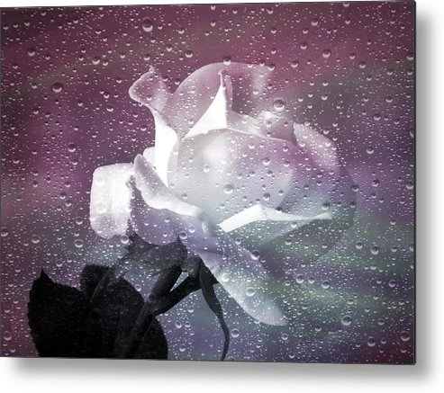 Rose Metal Print featuring the photograph Petals And Drops by Julie Palencia