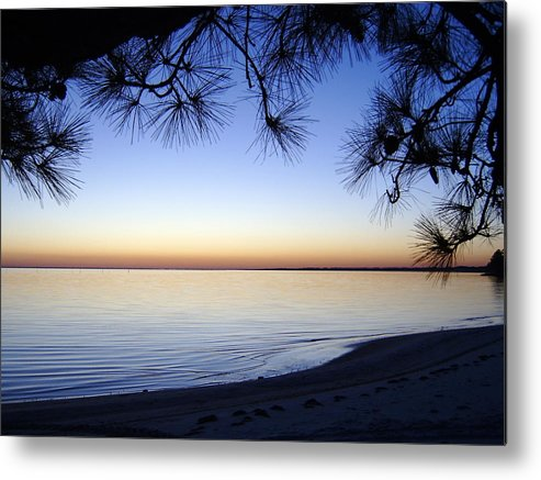 Tree Metal Print featuring the photograph Piney Sunset by Larry Underwood
