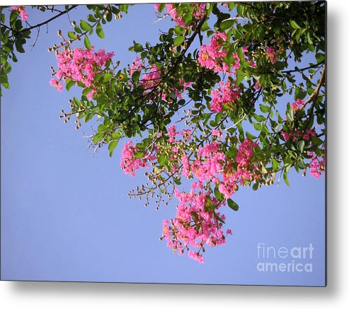 Nature Metal Print featuring the photograph Pink And Blue Canopy by Lucyna A M Green