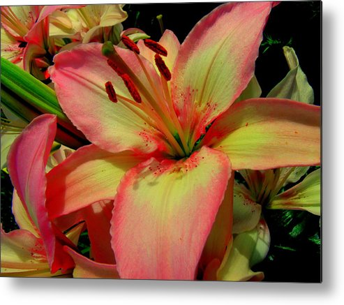 Lily Metal Print featuring the photograph Pink Lily by Erin Rednour