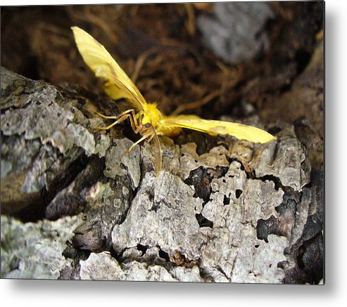 Insects Metal Print featuring the photograph Pleased To Meet You by Peggy King
