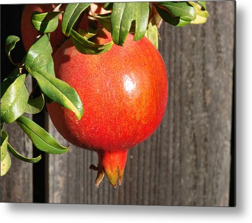 Pomegranate Metal Print featuring the photograph Pomegranate by Liz Vernand