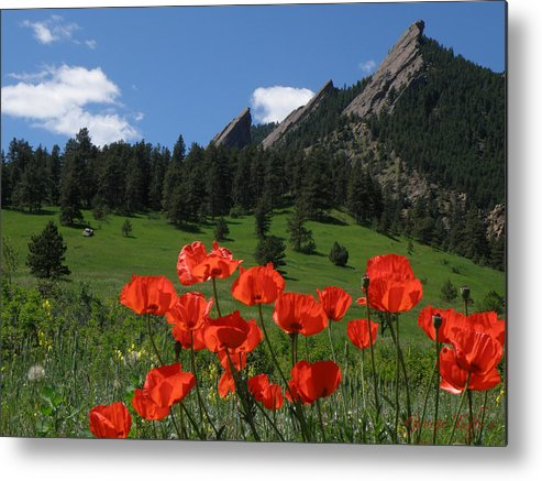 Flowers Poppies Flatirons Spring Boulder Colorado Chautauqua Beauty Metal Print featuring the photograph Poppies Flatirons by George Tuffy