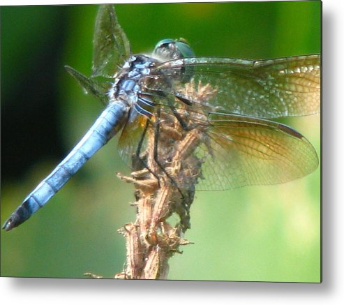 Dragonfly Metal Print featuring the photograph Power Blue by Paul Slebodnick