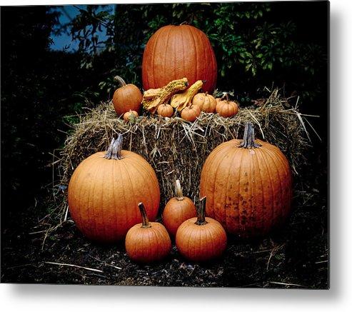 Pumpkin Metal Print featuring the photograph Pumpkins In The Dark by Jim DeLillo