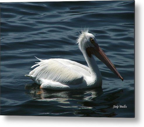 Birds Metal Print featuring the photograph Punk Pelican - Side View by Judy Waller