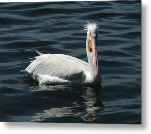 Water Metal Print featuring the digital art Punk Pelican by Judy Waller