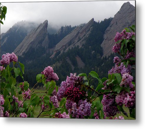 Landscapes Flatirons Lilacs Flowers Spring Misty Rain Boulder Colorado Metal Print featuring the photograph Purple Lilacs Flatirons by George Tuffy