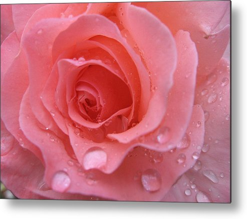 Floral Metal Print featuring the photograph Raindrops On Roses And..... by Kathy Roncarati