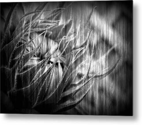 Sunflower Metal Print featuring the photograph Reaching Beyond by Tingy Wende