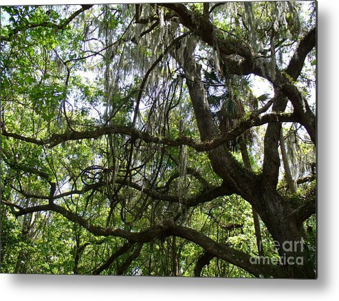 Tree Metal Print featuring the photograph Reaching by Stephanie Richards