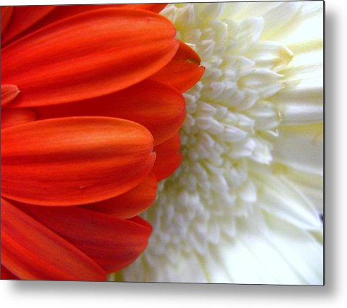 Flowers Metal Print featuring the photograph Red And White by Rhonda Barrett