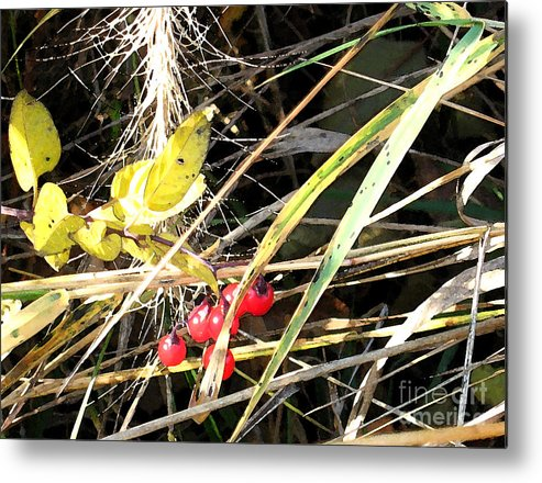 Berries Metal Print featuring the photograph Red Berries by Gary Everson