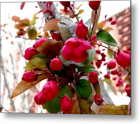 Blossoms Metal Print featuring the photograph Red Blossom by Mioara Andritoiu
