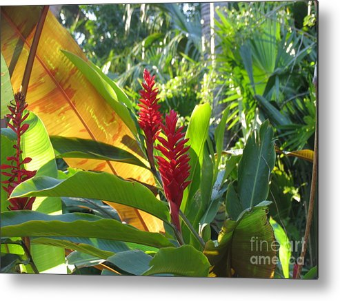 Red Metal Print featuring the photograph Red Ginger by Stephanie Richards
