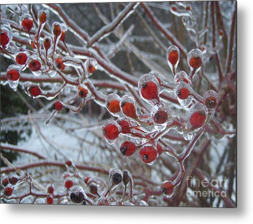 Berries Red Ice Storm Metal Print featuring the photograph Red Ice Berries by Kristine Nora