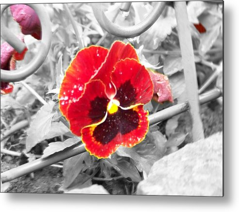 Flowers Metal Print featuring the photograph Red by Jessica Burgett